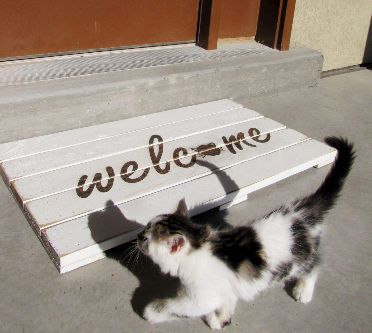 welcome cat doormat